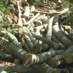 Prerja e pyjeve/ A po shkelet moratoriumi në Zagorie?