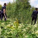 """""""110 ton drogë e Lazaratit u asgjësua pa procesverbal, s'ka prove që është djegur"""""""