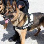 Frika nga kanabisi, shtohen qentë antidrogë në Kakavijë