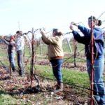 Subvencionet e fermerëve, shtohet numri i përfituesve në Gjirokastër