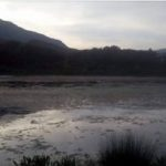 Çfarë po ndodh në Virua, liqeni i pushtuar nga algat