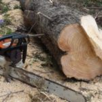Gjirokastër, inspektori kërcënon me jetë denoncuesin e prerjes së pyjeve (VIDEO)