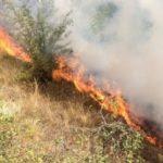 Situata nga zjarret në qarkun Gjirokastër, digjen 1 hektar bajame