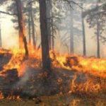 Zjarr masiv në Dropull, rrezikohen shtëpitë e fshatit Goricë