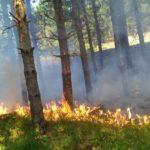 3 vatra zjarri në qarkun Gjirokastër gjatë 24 orëve të fundit