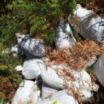 Gjirokastër, zbulohen 27 thasë me drogë në Golem. Nuk dihet kujt i përkiste (FOTO)