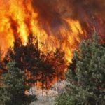 Mbi 30 të arrestuar për zjarrvënie të qëllimshme, rrezikojnë deri në 5 vite burg