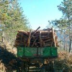 Prenë pyjet pa leje, arrestohet te 'Kthesa e Labovës' një i ri nga Gjirokastra. Kallëzohet në Prokurori edhe një 51-vjeçar