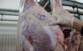 Mbyllen 4 pika therjeje në Gjirokastër, sekuestrohen 40 kg mish