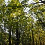 Reagon Bashkia Libohovë: S'ka abuzim me prerjet e pyjeve në Zagori, zonat janë miratuar nga Ministria e Mjedisit. Po monitorojmë situatën