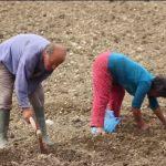 Gjirokastër, fermerët pa treg e pa rrugë (VIDEO)