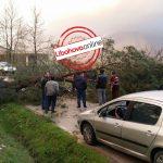 Rrëzohet pema, bllokohet rruga Libohovë- Gjirokastër (FOTO)