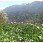 Zagoria shpallet Park Natyror (VIDEO)