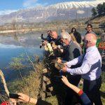 Gjirokastër, 4 çifte patash nisin një jetë të re në Liqenin e Viroit (FOTO)