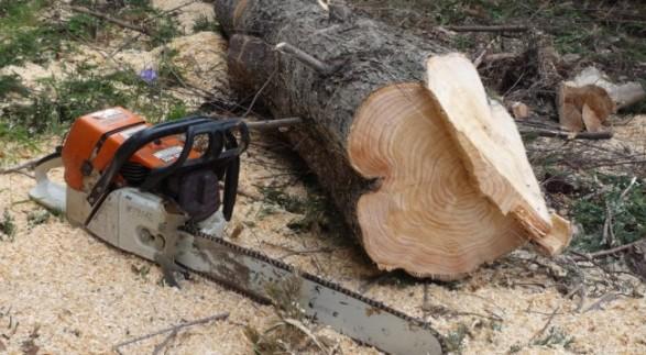 Kompania 'fantazmë' kapet duke prerë pyjet në Zagori, nënkryetari i Bashkisë Libohovë i bën kallëzim në polici
