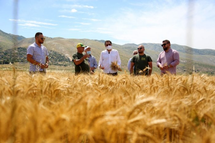 """Nis korrja e grurit në Dropull, """"Agro Beqari"""" ferma më e madhe e drithit në Shqipëri (FOTO)"""