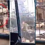 Del VIDEO e terrorit në Bularat, ekstremisti Kaçifas terrorizoi fshatin dhe qëllonte polcinë me kallash